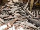 """Đông Timor chặn 10 tàu Trung Quốc săn bắt """"hàng ngàn con cá mập"""""""
