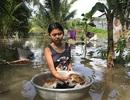 Triều cường kéo sập bờ ao cá, hàng chục hộ dân ngập sâu trong nước