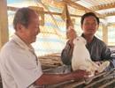 Thu hàng trăm triệu đồng mỗi năm từ nuôi thỏ