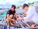 Xác định nguyên nhân cá nuôi lồng bè chết hàng loạt ở Phú Yên