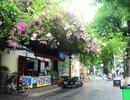 Phố phường Hà Nội lãng mạn với những giàn hoa giấy tuyệt đẹp