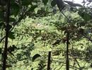 Voi rừng lại xuất hiện ở Quảng Nam