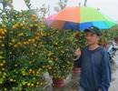 """Đà Nẵng: Người bán hoa Tết """"khóc ròng"""" vì trời mưa"""