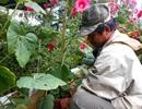 Hoa Tết tăng giá, người mua vẫn còn chần chừ