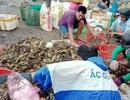 Làm rõ nguyên nhân tôm hùm chết hàng loạt, thiệt hại hơn 700 tỷ đồng