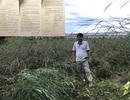 Bình Dương: Không mua được đất, nguy cơ mất 5 tỷ tiền đặt cọc!