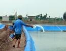 Vi phạm về phòng, chống dịch bệnh thủy sản bị phạt từ 700.000-6.000.000 đồng