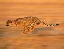 Những loài vật nhanh nhất hành tinh