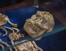 Phát hiện bộ xương bốn triệu năm tuổi hoàn thiện nhất của tổ tiên loài người