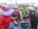 Một ngư dân đánh được cả trăm tấn cá bè, có ngay 4 tỷ đồng