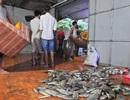 Thủy điện xả lũ, dân vừa chạy lụt vừa lo bán cá chết