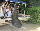Thót tim cảnh cá sấu dài 6m chồm sát lên thuyền chở khách để vồ mồi