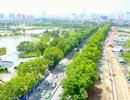 Hà Nội sẽ trồng thay thế cây gì sau khi di dời hơn 1.300 cây xanh