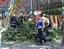 Cây 200 tuổi đổ đè chết 13 người ở Bồ Đào Nha