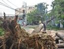 Hàng loạt cây xanh ngã đè nhà dân và ô tô sau trận mưa lớn