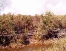 Nắng nóng thiêu cháy gần 30 ha rừng tràm