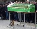 Chú chó trung thành quyết không rời quan tài và mộ sau khi chủ qua đời