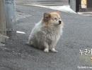 Cảm động chú chó chờ chủ suốt 3 năm mà không biết chủ sẽ không về