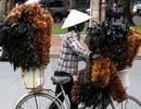 Chuyện về làng chổi lông gà ở miền Tây