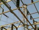 Con rắn khiến gần 4.800 nhà mất điện