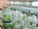 Phê duyệt kế hoạch phát triển công nghiệp sinh học đến năm 2030