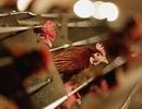 Trung Quốc ghi nhận thêm nhiều ca nhiễm và tử vong do H7N9