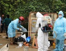 Dịch cúm gia cầm H5N6 bùng phát, vắc xin không đủ ngăn dịch