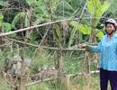 Đất đang ở bị huyện cấp trích lục cho người khác: Huyện bỏ mặc dân?