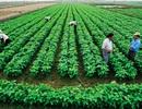 Phó Thủ tướng: Thúc đẩy tích tụ đất đai, tạo điều kiện tái cơ cấu nông nghiệp