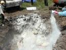 Tiêu hủy hàng trăm con gia cầm bị nhiễm H5N1