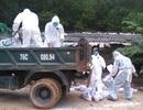 Quảng Ngãi: Gia cầm tiếp tục chết, nghi cúm A - H5N6