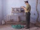 Công bố đường dây nóng bảo vệ động vật hoang dã