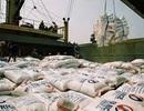 Thương nhân Việt Nam trúng 6/8 lô thầu xuất khẩu gạo vào Philippines