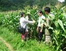 Quảng Bình: Hàng chục cán bộ tri thức trẻ… bơ vơ khi kết thúc dự án