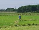 Thừa Thiên Huế: Dự án giết mổ gia súc bị kịch liệt phản đối vì nguy cơ ô nhiễm