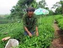 Rà soát, tích hợp chính sách giảm nghèo