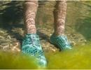 Giày thể thao làm từ… tảo giúp làm sạch môi trường nước