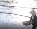 Nghệ An: Tránh nắng nóng, nông dân cấy lúa lúc rạng sáng