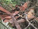 Quảng Trị: Giám sát rừng bằng... máy tính bảng