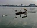 Làm rõ thông tin công nhân môi trường đập vịt trời trên Hồ Tây