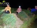 Soi đèn, trắng đêm thu hoạch hành lá kiếm gần 200.000 đồng/ngày