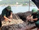 Bắt tàu 20 tấn chở hàu chết, bốc mùi từ Trung Quốc về Việt Nam tiêu thụ