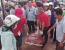Hàng trăm người chen chân mua thịt lợn giá rẻ