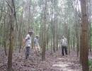 Chăm rừng cây gây quỹ khuyến học hàng trăm triệu đồng