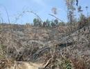 Bắt cán bộ quản lý công ty lâm nghiệp vì để mất rừng