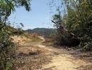 Để mất hàng ngàn hecta rừng,  giám đốc và phó giám đốc bị bắt