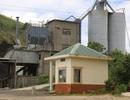 Đình chỉ hoạt động nhà máy xi măng gây ô nhiễm môi trường