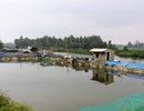 """Những hồ nuôi tôm đang """"bức tử"""" sông Kinh"""