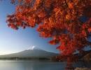 Mê đắm thu lá đỏ Nhật Bản