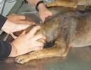TPHCM: Tai họa vì rửa vết chó cắn bằng nước